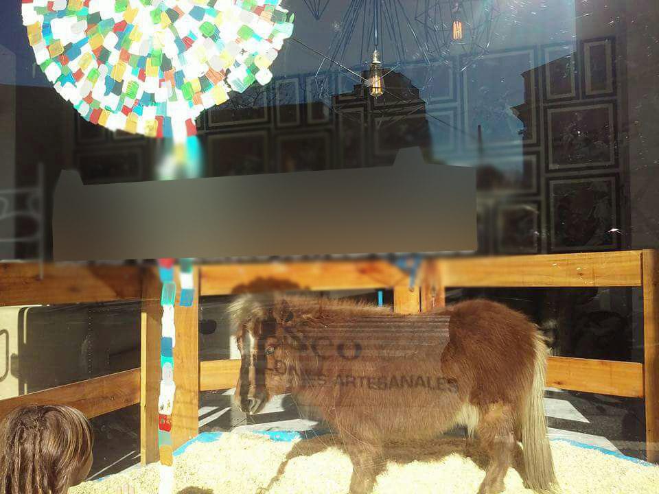 Pony - Gacetilla